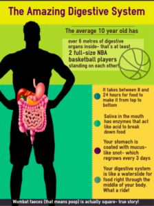 A basketball player silhouette with a full colour anatomical digestive system displayed wuthin. Some facts are listed on the right side in a menu box.